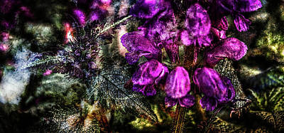 Photograph - Shades Of Purple  by Thom Zehrfeld