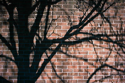 Photograph - Shadow And Sunlight by Carl Young