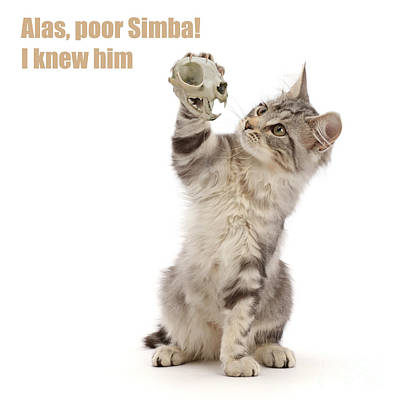 Photograph - Shakespeare Cat - Alas Poor Yorick by Warren Photographic