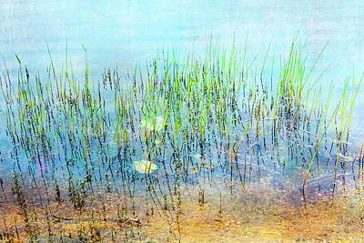 Photograph - Shallow Reeds by John Rivera