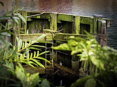 Photograph - Shape And Green Rot No.15 by Juan Contreras