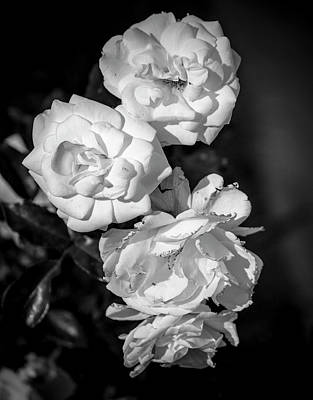 Photograph - Shared Beauty by Eric Christopher Jackson