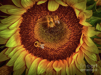Photograph - Sharing The Sunflower by Judy Hall-Folde