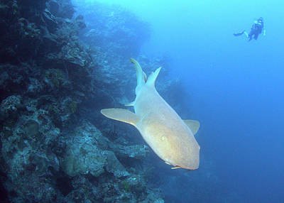 Photograph - Shark Wall by Todd Hummel