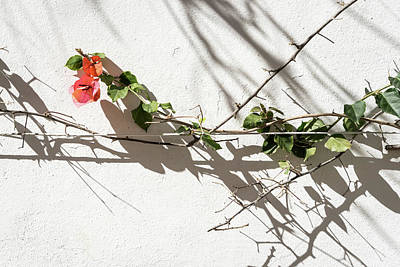 Photograph - Sharp Thorny Shadows - by Georgia Mizuleva