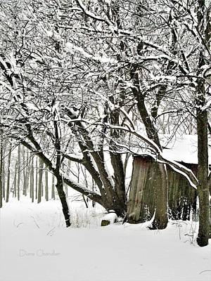 Photograph - Shed With Snow Covered Trees by Diane Chandler