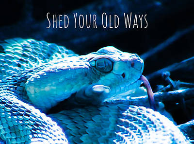 Photograph - Shed Your Old Ways 2 by Judy Kennedy