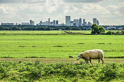 Photograph - Sheep And The City by Frans Blok
