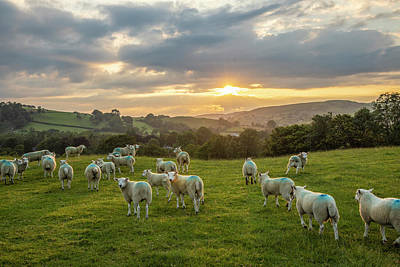 Photograph - Sheep Into The Sunrise  by John McGraw