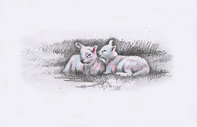 Drawing - Sheep Sketch I by Helen White