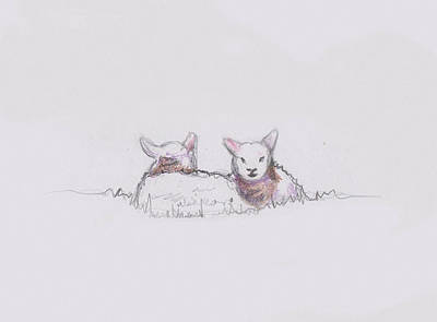Drawing - Sheep Sketch II by Helen White