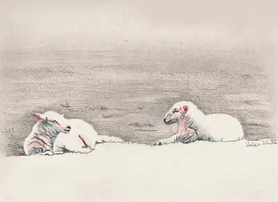 Drawing - Sheep Sketch IIi by Helen White