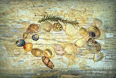 Photograph - Shell Fish 2 By Kaye Menner by Kaye Menner