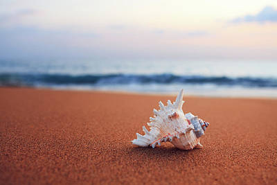 Photograph - Shell On The Beach by Borchee