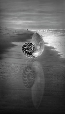 Photograph - Shell Reflections In The Sand In Black And White by Debra and Dave Vanderlaan