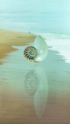 Photograph - Shell Reflections In The Sand In The Soft Dawn by Debra and Dave Vanderlaan