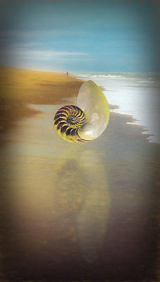 Photograph - Shell Reflections On A Sandy Beach by Debra and Dave Vanderlaan