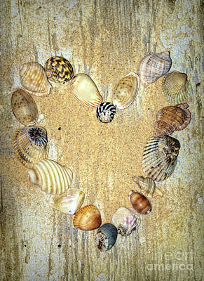 Photograph - Shells Of The Heart 2 By Kaye Menner by Kaye Menner