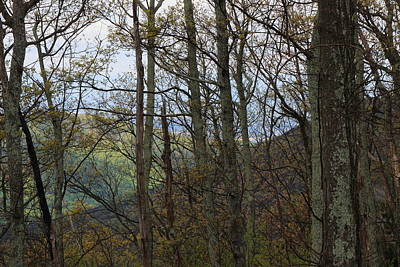 Photograph - Shenandoah National Park 3361 by John Moyer