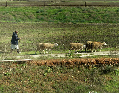 Photograph - Shepherd On The Move by Jessica Levant