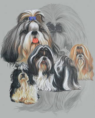 Mixed Media - Shih Tzu Revamp by Barbara Keith