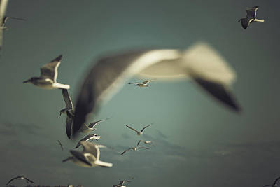 Photograph - Shooting Thru Seagulls by Jessica Nelson