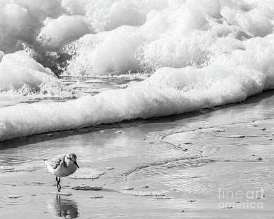 Photograph - Shore Bird In The Surf by Thomas Marchessault
