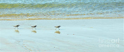Pop Art Rights Managed Images - Shore Birds Marching Royalty-Free Image by Sharon Williams Eng