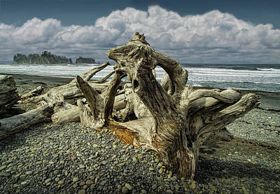 Photograph - Shore Driftwood On Rialto Beach In Olympic National Park by Randall Nyhof