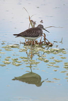 Photograph - Shorebird Reflection by Rick Veldman
