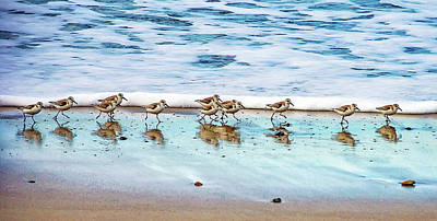 Bird Photograph - Shorebirds by Vanessa Mccauley