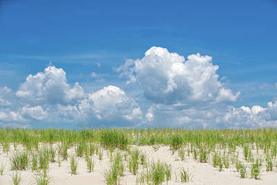 Photograph - Shoreline Simplicity by David Harwood