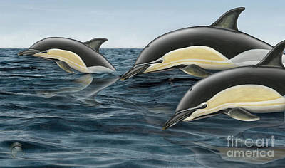 Painting - Short-beaked Common Dolphin - Delphinus Delphis - Gemeiner Delfin - Fineart Print-stock Illustration by Urft Valley Art