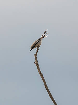 Photograph - Shrike Ready To Launch by Loree Johnson