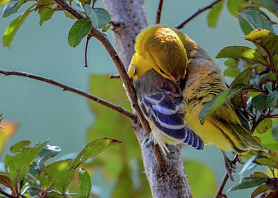 Achieving - Shy Bird by Tracie Fernandez
