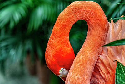 Photograph - Shy Flamingo by Kay Brewer