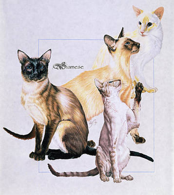 Drawing - Siamese by Barbara Keith