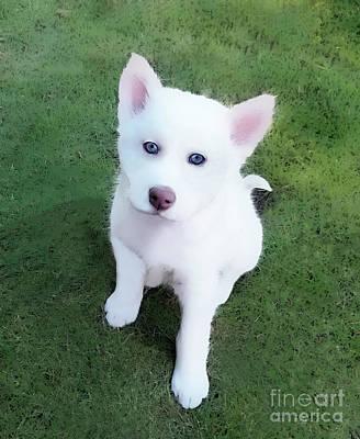 Photograph - Siberian Husky Puppy A030619 by Mas Art Studio