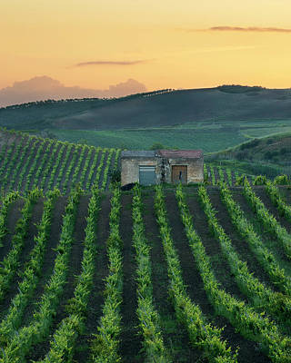 Photograph - Sicilian vineyard by Giuseppe Buccheri