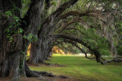 Photograph - Side View Avenue Of Oaks by Darylann Leonard Photography