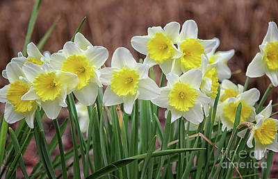 Photograph - Signs Of Spring by Karen Adams