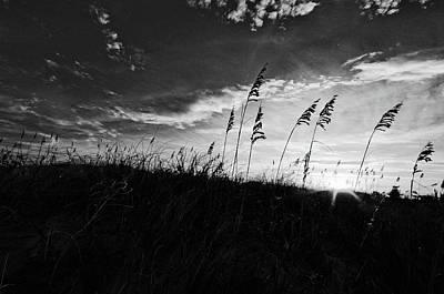Photograph - Silent Sentinels  by John Harding