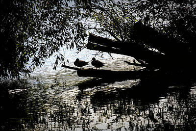 Moody Trees Rights Managed Images - Silhouette Ducks #h9 Royalty-Free Image by Leif Sohlman