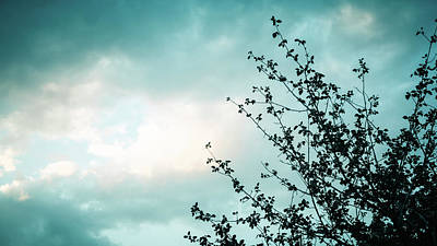 Photograph - Silhouette Of Branches Against The Sky by Jeanette Fellows