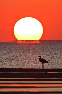 Gulf Coast Photograph - Silhouette Of Great Blue Heron Ardea by Danita Delimont