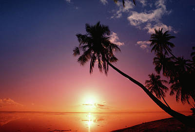 Photograph - Silhouette Of Palm Trees, Tahiti by Kevin Forest