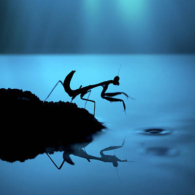Photograph - Silhouette Of Praying Mantis On Blue by Twomeows