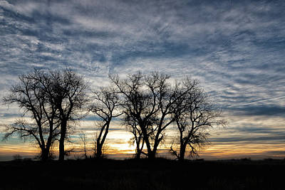 Photograph - Silhouetted Trees At Sunrise by Tony Hake