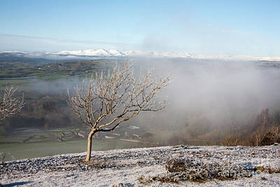 Unicorn Dust - Silver Birch tree standing above swirling mist  Scout Scar Lake District Cumbria England by Michael Walters