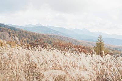 Scenery Photograph - Silver Grass In Autumn, Japan by Toshiro Shimada